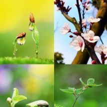 春季,适合女人常吃的3种食物,营养丰富,美味不贵,还能养人。
